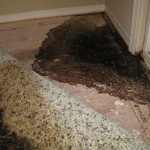 Water, mold